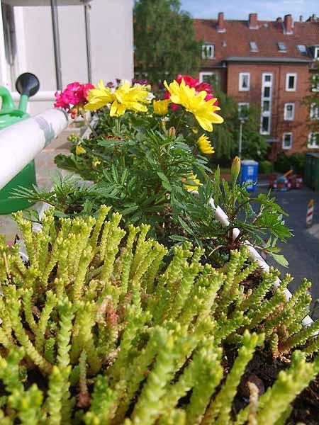 blumen-pflanzen-balkonkasten