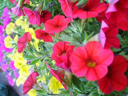 garten mit schönen pflanzen & blumen anlegen - tipps, hilfe, Garten Ideen