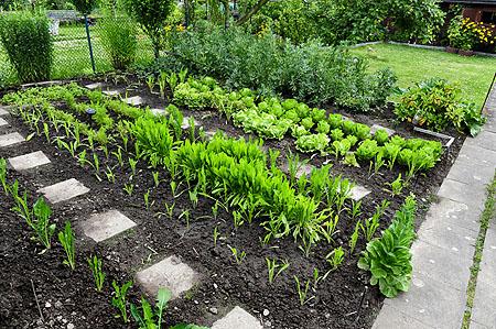 salatgurken anbauen freiland