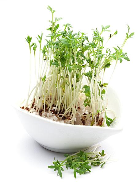 kresse-pflanzen-tipps