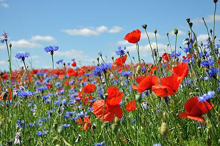 Blumenwiese Anlegen natürliche grüne wiese blumenwiese im garten neu anlegen wilde
