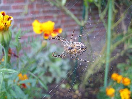spinnen-nuetzling-garten