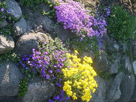 geeignete pflanzen für steingarten: der blauschwingel – hirobeauty, Garten und erstellen