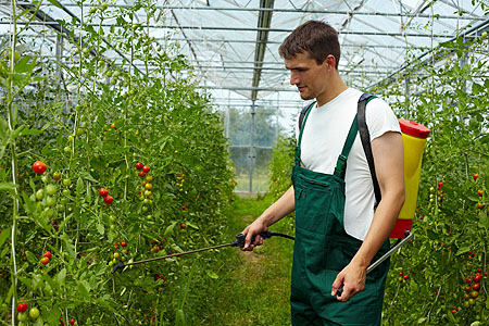 tomaten-garten-anbau