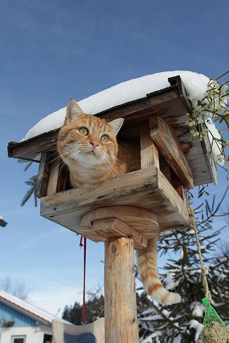 vogelhaus aus holz selber bauen / nistkasten basteln als garten,