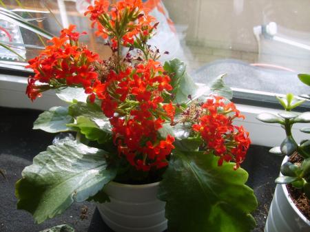 Pflegeleichte Zimmerpflanzen Anspruchslos Bewasserung Einfache