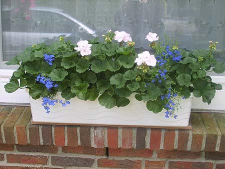 Blumenkasten Mit Wasserspeicher Für Einfache Pflege / Versorgung ... Blumenkasten Mit Wasserspeicher Blumen