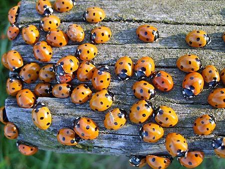 Insektenhotel Insektenhaus Kaufen Selber Bauen Insekten