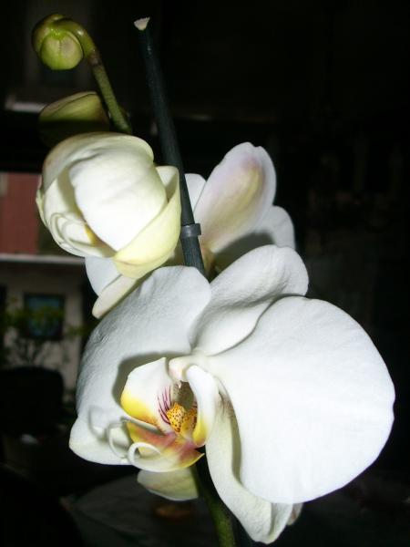 Orchideen pflege schneiden