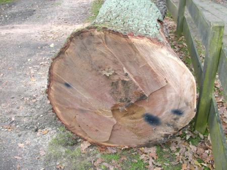 Baum Richtig Fallen Baumfallung Im Garten Mit Genehmigung Preis